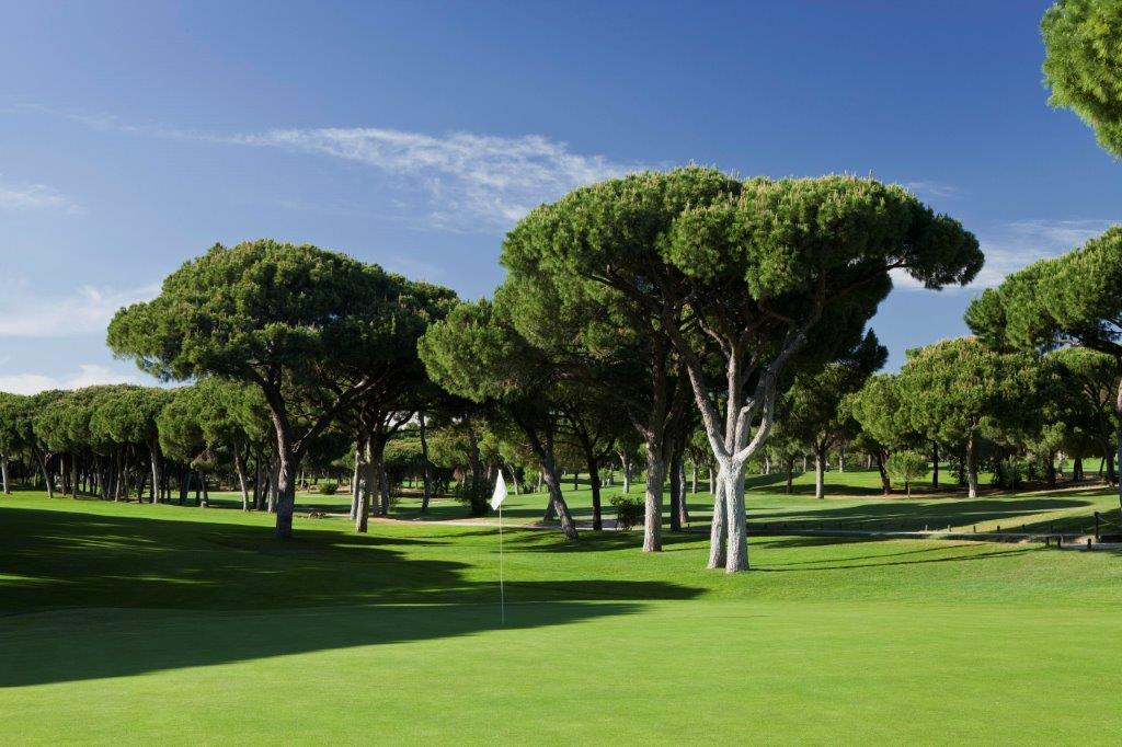 Arbres du golf Oceanico Old au Portugal