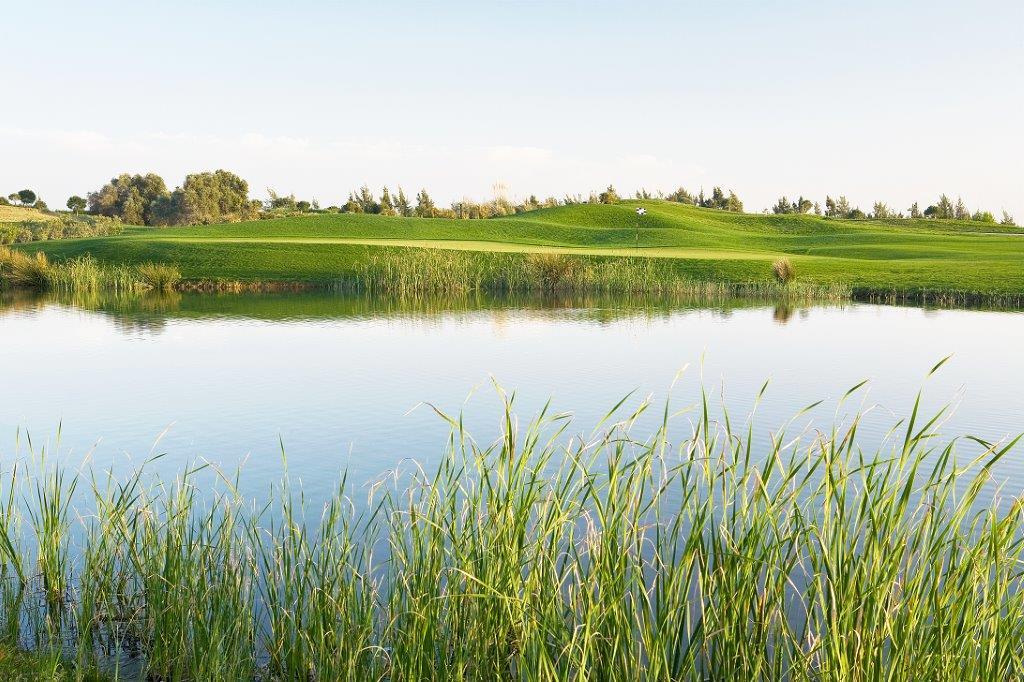 Roseau de l'étang  du golf d'Oceanico Victoria au Portugal